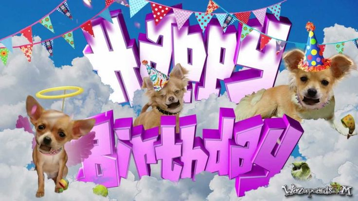 HAPPY BIRTHDAY - Chihuahua Dog [ For Her ]