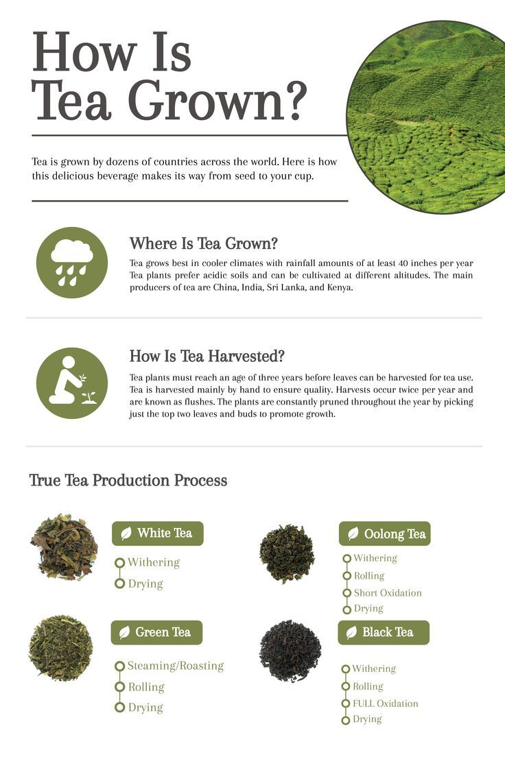 How Is Tea Grown The Story Of Tea From Harvest To Cup Cup Leaf Green Tea Smoothie Tea Facts Tea History