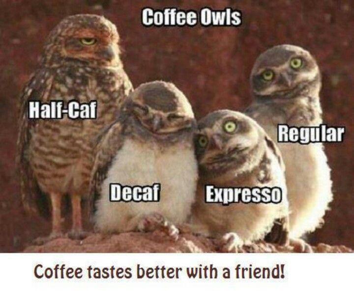 animal humor   Animal Humor/Wisdom Expresso tho