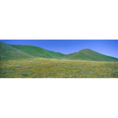 Panoramic view of spring flowers and green rolling hills in Carrizo Plain National Monument San Luis Obispo County California Canvas Art - Panoramic Images (36 x 12)