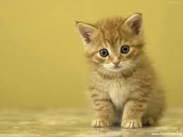 kedileri çok seviyorum