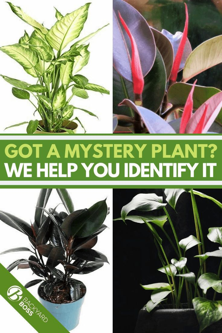 How To Identify House Plants Quickly Identify Indoor Plants In 2020 Plants Identifying House Plants House Plants