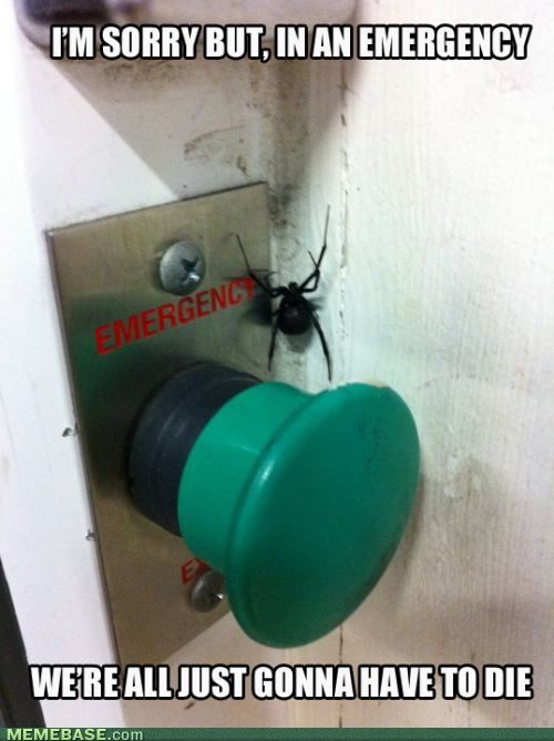 sorry: Black Widow, Laughing, Funny Pictures, Funny Commercial, Funny Stuff, So True, Buttons, I Hate Spiders, True Stories