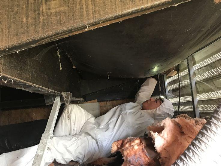 moldexperts Floridamold moldremediation moldremoval
