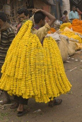 Calcutta, India - December 18, 2008: Man carrying garlands of yellow flowers at the flower market in Kolkata West Bengal India.