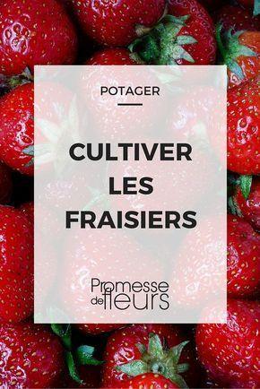 Cultiver les fraises, c'est facile ! Voici tous nos conseils pour en récolter de plein paniers. #potager #fraise