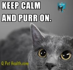 #Qpets is an all natural supplement that helps cats and dogs reduce anxiety and have optimal brain health. Visit http://qpethealth.com for details
