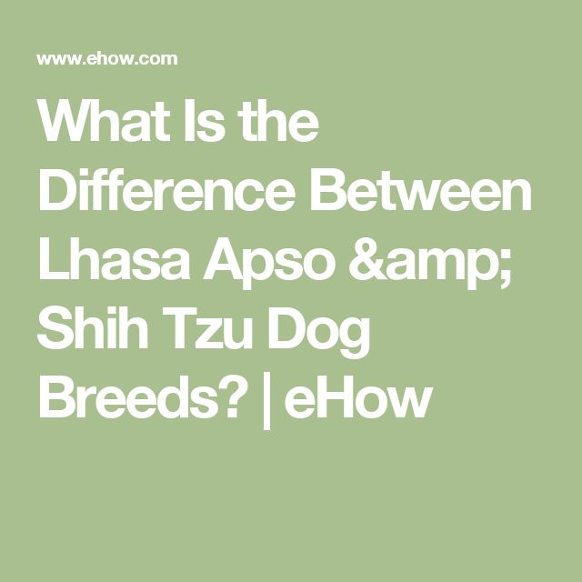 What Is the Difference Between Lhasa Apso & Shih Tzu Dog Breeds? | eHow