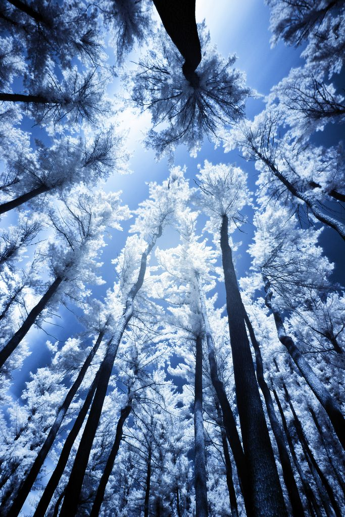 Beautiful nature the blue filter and vertical perspective - Nature wallpaper vertical ...