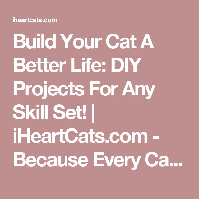 Build Your Cat A Better Life: DIY Projects For Any Skill Set! | iHeartCats.com - Because Every Cat Matters ™