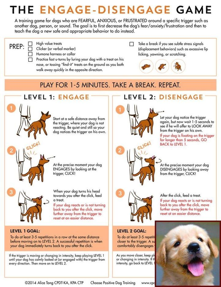 House Training Your Puppy Video And Clicker Training Dogs Tricks