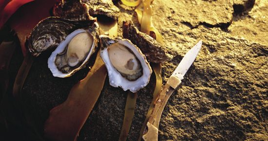 Tasmania has Australia's finest oysters.  Listed as a must do experience on   NZ based AA Travel's site 101 Must-Do's