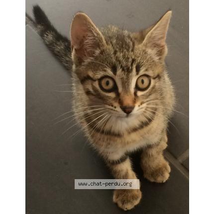 #191122 chat trouvé à MOULIN PLATEAU | chat-perdu