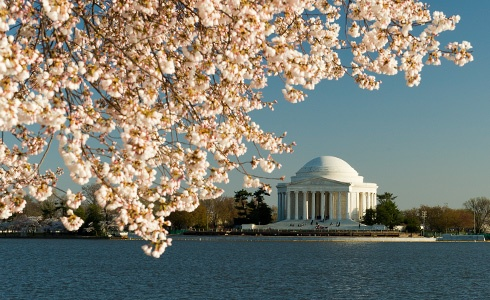 D.C. Cherry blossomsFavorite Childhood, Buckets Lists, Favorite Things, Favorite Places, Destinations Stations, Childhood Memories, Imitation, Cherries Blossoms Th, Blossoms Th Jefferson