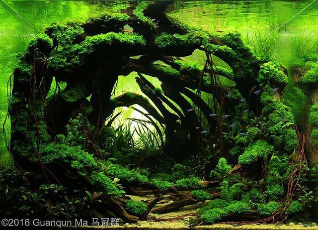 Awesome scape ------------------------------------------------ #aquascape #aquarium #aqua #aquascaping #wood #grass #tetra #fish #fishtank #tropical #tropicalfish #iwagumi #scenery #water #fresh #aquariumsofinstagram #aquaria #beautiful #awesome #plants #aquariums #instafish #naturalaquariums #beautiful #aquariumsdaily #design #ADA