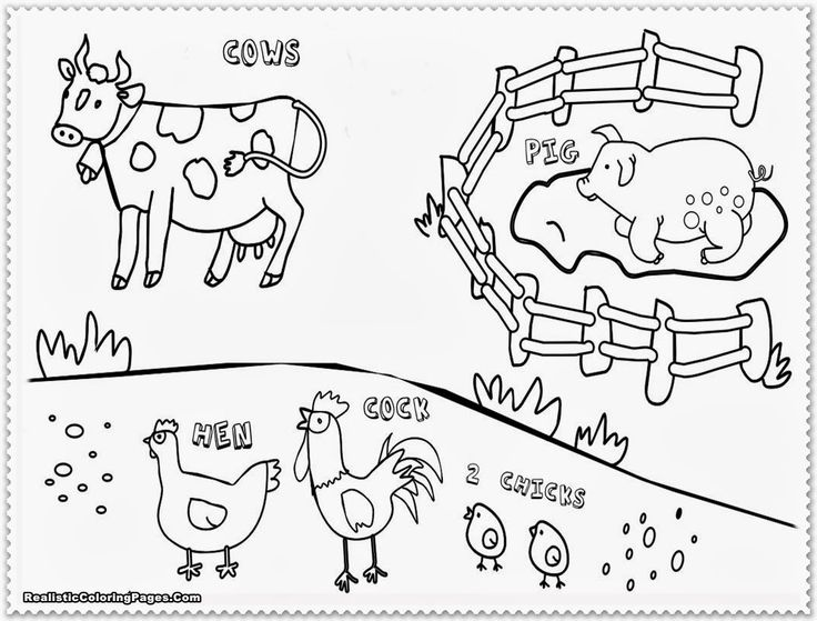 cow rooster coloring page coloring page animal coloring pages farm