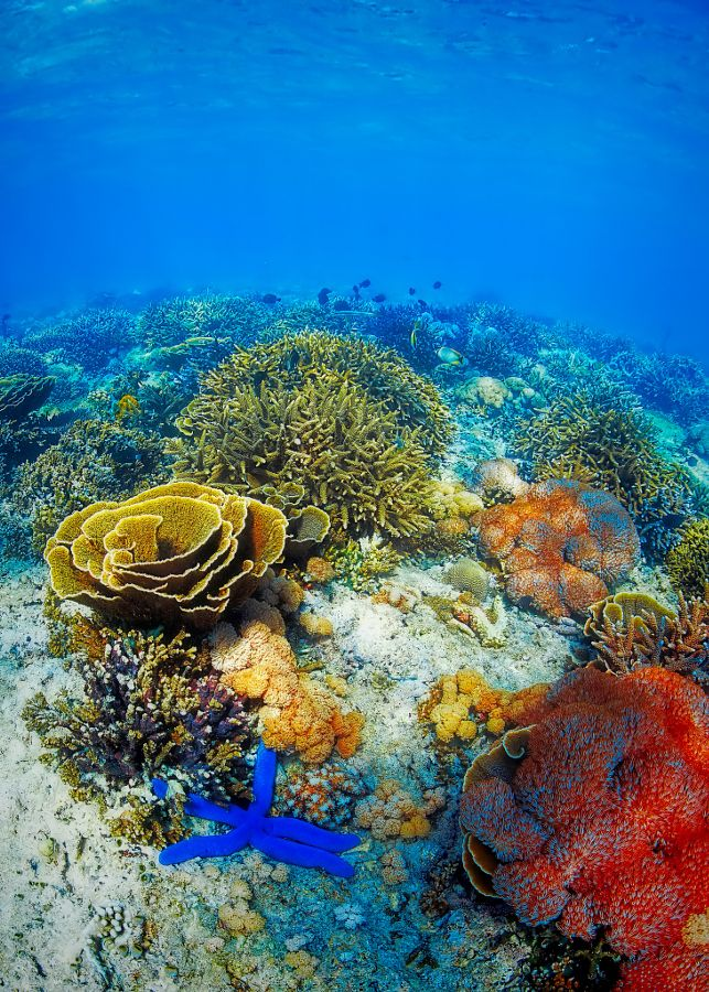 nature coral underwater landscape - photo #2