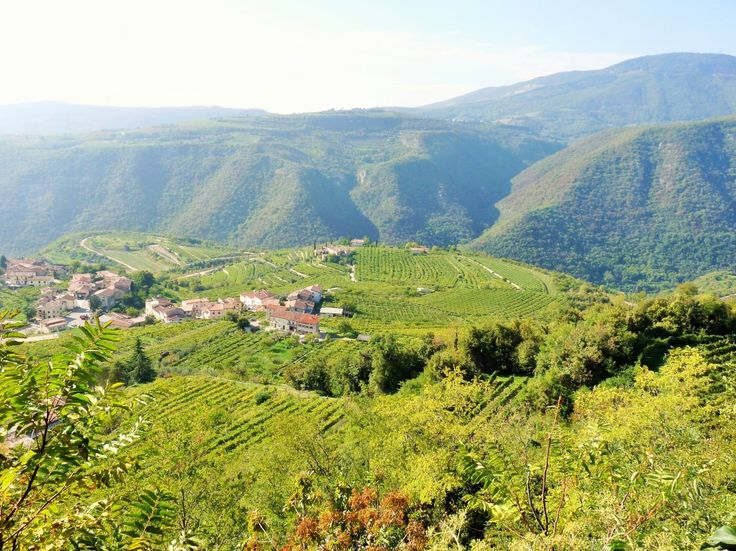 Wine tour in Valpolicella, the land of Amarone (tour in a small group)…