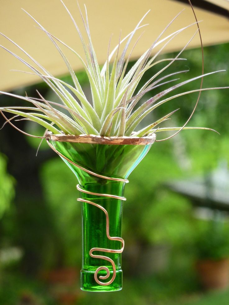 Air Plant Holder - Recycled bottle - Green