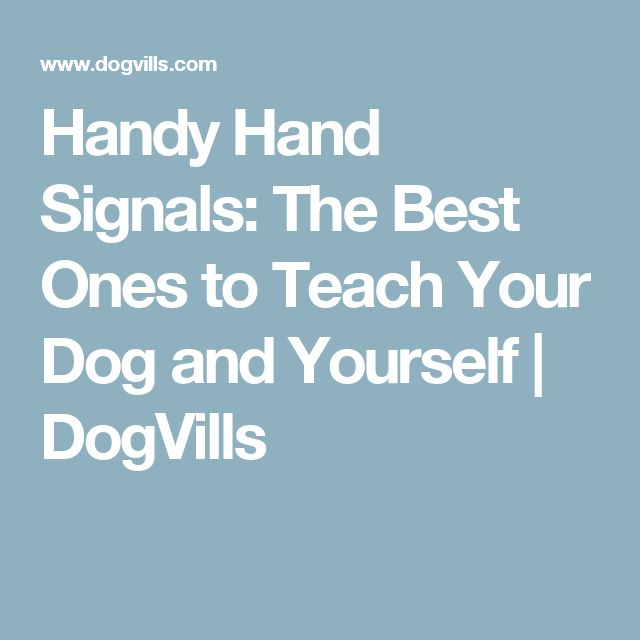 Handy Hand Signals: The Best Ones to Teach Your Dog and Yourself | DogVills