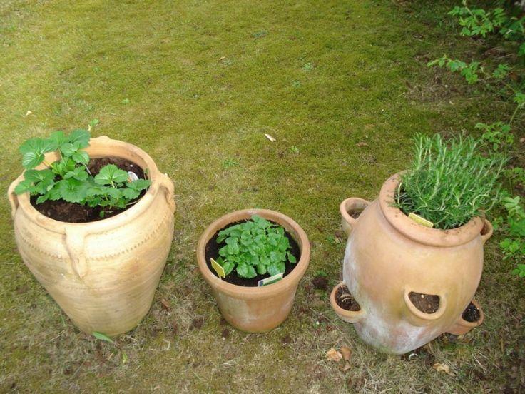 Vannak olyan növények, amelyek jobban viselik a konténeres kertészkedés körülményeit, mint mások. Íme néhány javaslat, hogyan válasszunk zöldséget, fűszert, egynyári virágot vagy akár évelő cserjét....
