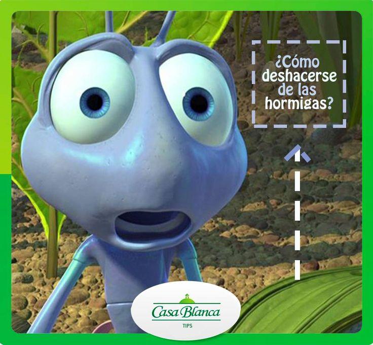 Remedios naturales para deshacerte de las hormigas ya - Remedios caseros para eliminar hormigas en casa ...