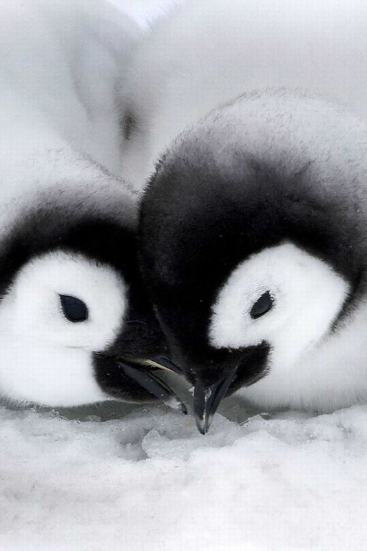 Cute Animal Pictures: 150 Of The Cutest Animals!