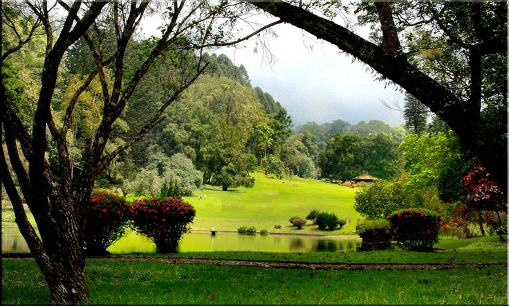 Not Just in Bogor, this 4 Botanical Garden in Indonesia
