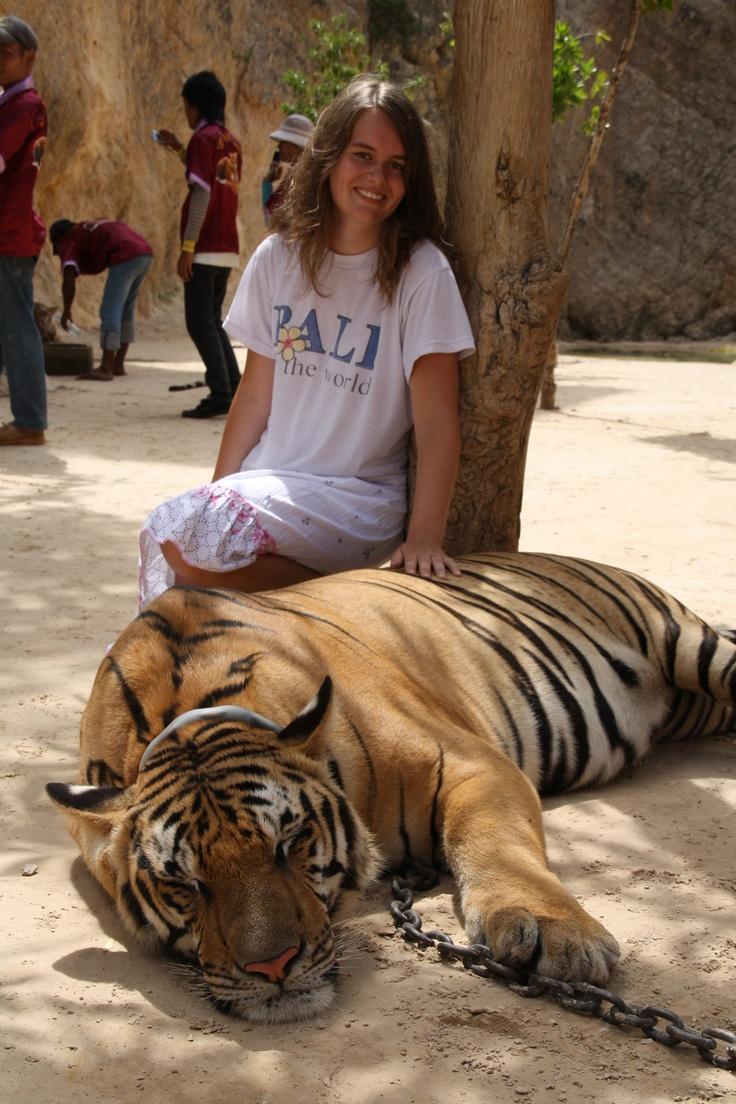 Don't necessarily want to go to Thailand...just want to pet a tiger!