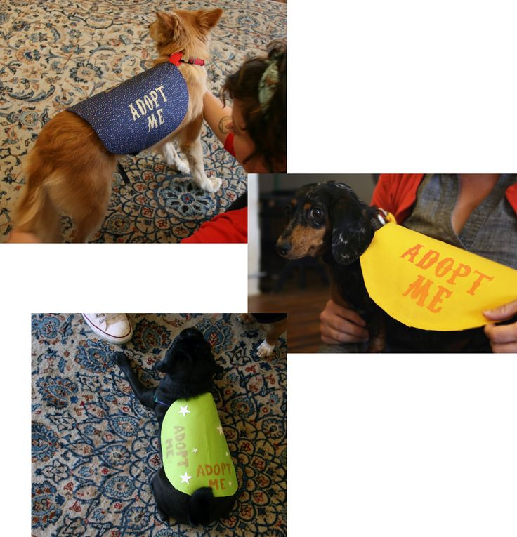 """How To: """"Adopt Me"""" vests for your local shelet animals. NO SEW!"""