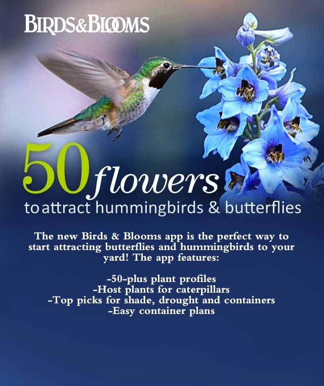 50 flowers to attract hummingbirds and butterflies - Do you have the app? Birds and Blooms has its very own app to help you find the best plants for bringing hummingbirds and butterflies to your yard. Click through for more info.
