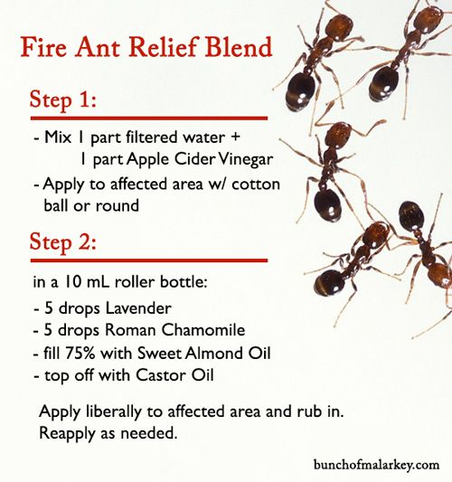 Fire Ant Bites Natural Remedy