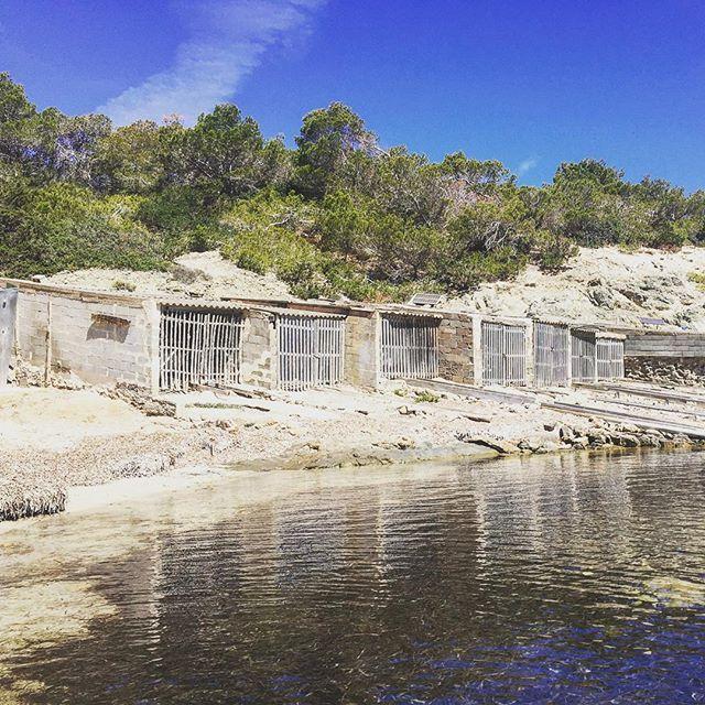 Pou des Lleó. Eine der kleinen Buchten auf Ibiza, in der noch nicht das Seegras für die Touristen entfernt wurde. Nur mit dem Auto zu erreichen oder mit dem Fahrrad, aber so schön! #Ibiza #SantaEulia