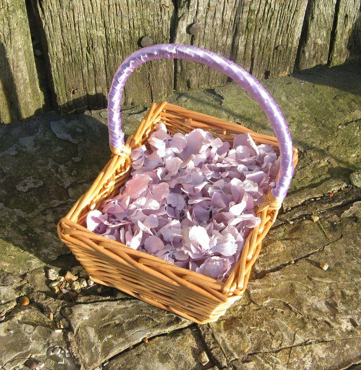 Lilac Hydrangea Petals from the Real Flower Petal Confetti Company  #weddingconfetti #biodegradableconfetti #naturalconfetti #realflowerpetalconfetti #hydrangeas