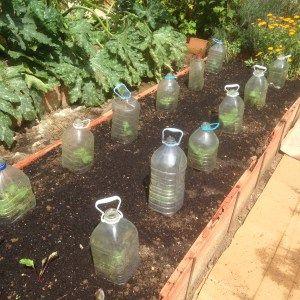 Las 25 mejores ideas sobre jardines de flores de oto o en for Alelopatia en hortalizas