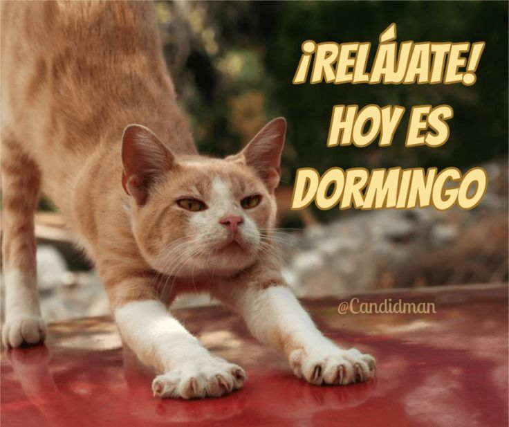 Relájate!  Hoy es Dormingo.  @Candidman     #Frases Humor Candidman Domingo Dormingo @candidman