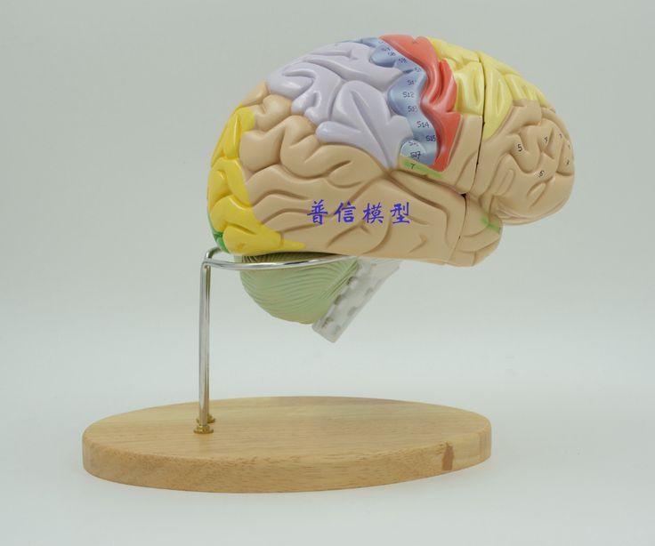 2 раз мозг человека анатомический модель сборка модели Медицинской скелет учебные пособия