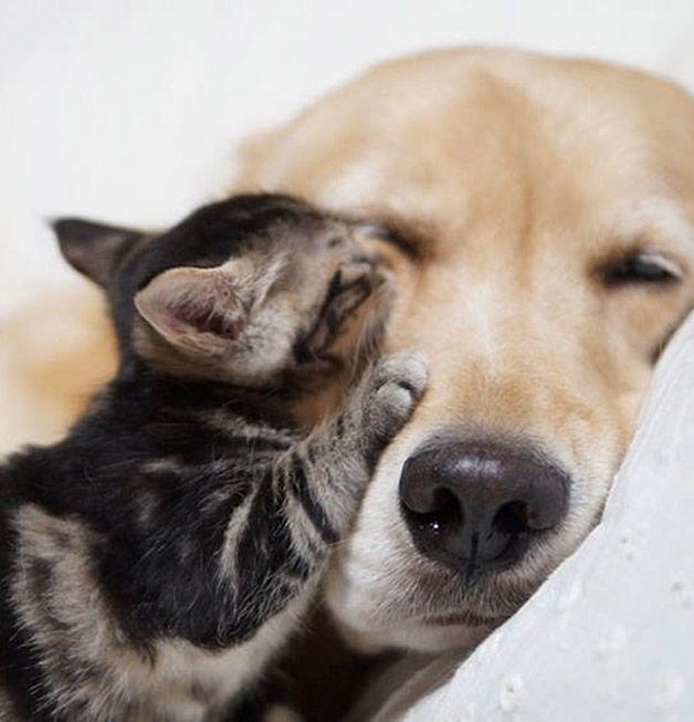 Linda história de amor animal: Ichmi e Ponzu.