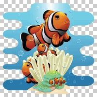 Popular : Clownfishes