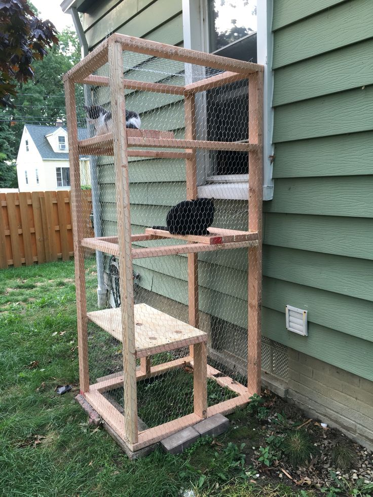 Catio! Simple outdoor cat enclosure using a few 2x4 and