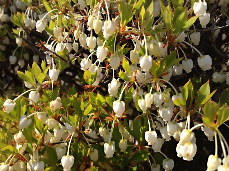 Spring's flowers in green park of Fukuoka