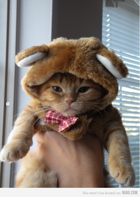 cat or bear?: Hats, Dresses Up, Funny Cat, Teddy Bears, Cat Costumes, Bunnies, Kitty, Animal, Pet Halloween Costumes