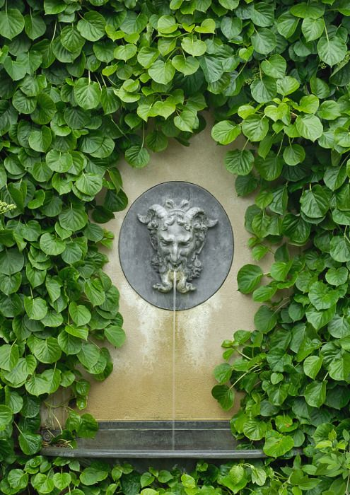 """Green Man fountain. (actually not 100% sure if this is a """"green man"""" with the horns and all but with the green climbing hydrangea around him, we're close enough.) ZsaZsa Bellagio."""