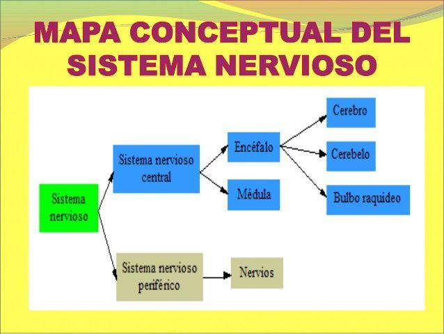 Sistema nervioso para 5° y 6° de primaria 2013