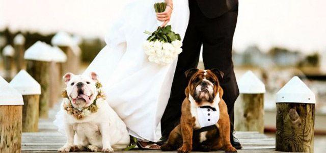 Conosci la figura professionale del wedding dog sitter? Un valido e prezioso aiuto per chi vuole una cerimonia unica, anche, per il suo amico a quattro zampe. Leggi i servizi che offre questa professione e condividi il tuo sì con Fido! #wedding #dogsitter #weddingdogsitter
