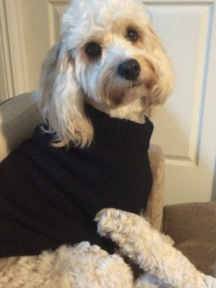Keeping warm with his new jumper