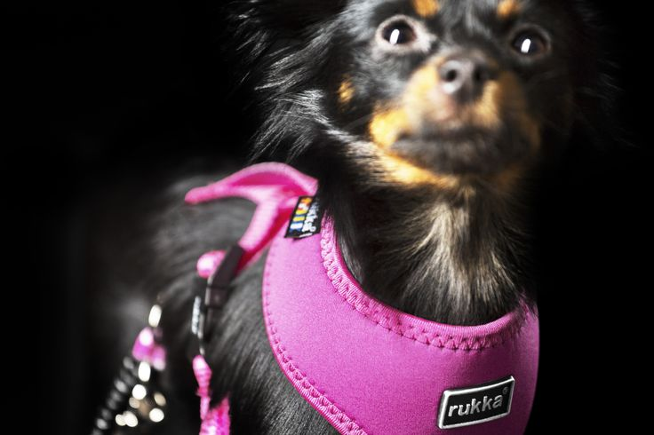 COMFORT harness - Spring / Summer 2017 by Rukka Pets
