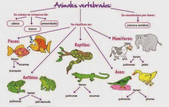 Cosas De Niños Para La Escuela Animales Vertebrados E Invertebrados Vertebrados E Invertebrados Vertebrados Animales Vertebrados