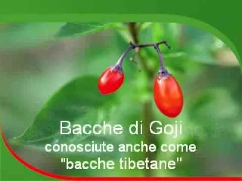 ▶ Bacca di Goji, grande fonte di antiossidanti - YouTube