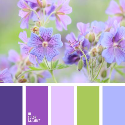 celeste y rosado, celeste y violeta, de color malva, elección del color, rosado suave, tonos lilas, verde, verde lechuga y violeta, verde vivo, violeta vivo, violeta y celeste, violeta y rosado.